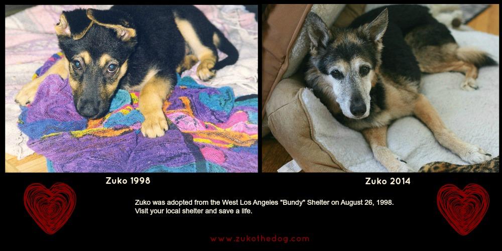 Zuko 1998 and Zuko 2014