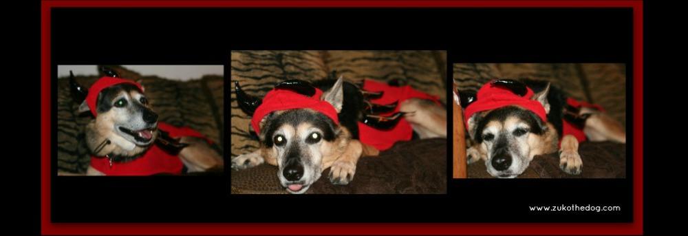 Zuko in costume