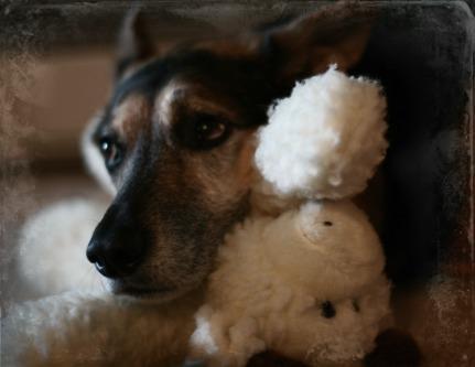 Zuko the Dog and his baby