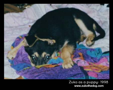 Zuko the Dog as a puppy - 1998