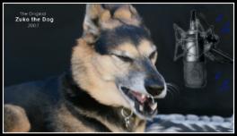 Zuko the Dog sings STP harmony