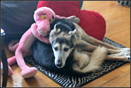 Pink and Zuko on Zuko's 18th Birthday