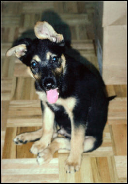 Original Zuko the Dog as a puppy 1998